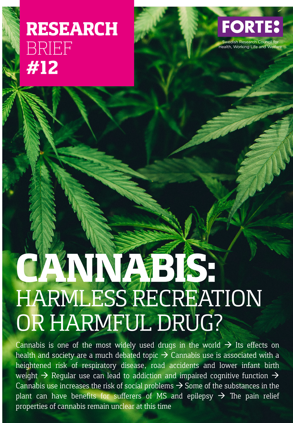 Research brief #12: Cannabis: harmless recreation or harmful drug?